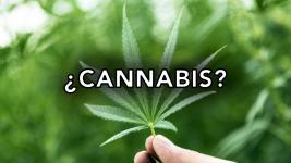 ¿Es conveniente la legalización del cannabis? ¿En qué casos? ¿De qué forma? Aquí nuestra propuesta.